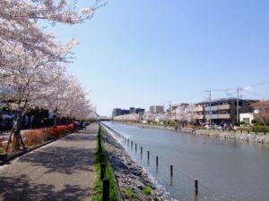 江戸川区新川親水公園